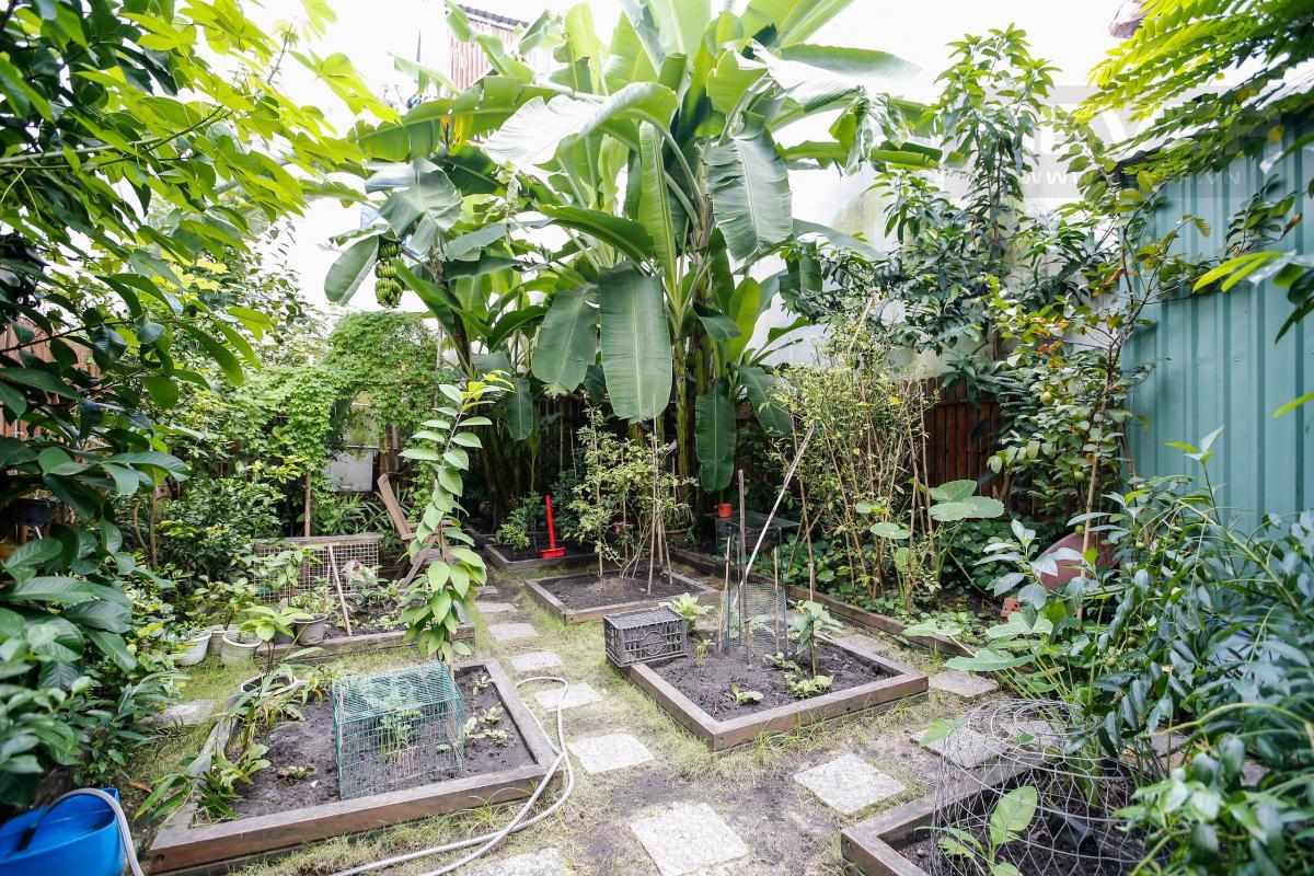 Khu nhà vườn Nhà 3 tầng Nguyễn Văn Đậu