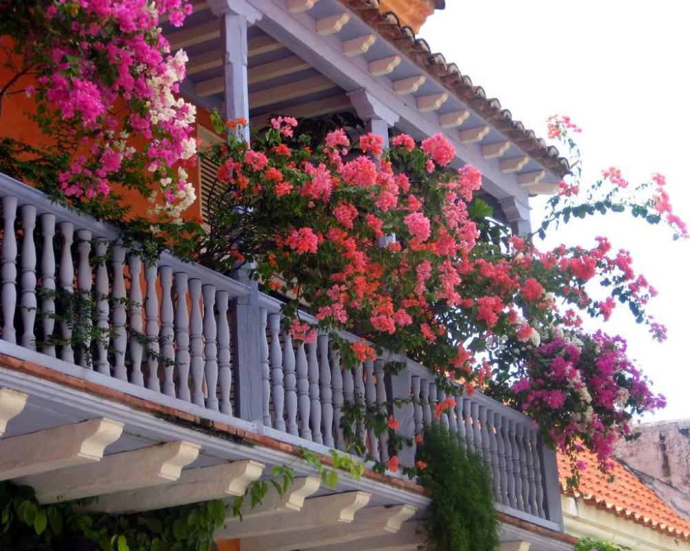 Nhà có ban công hướng Tây, nên trồng hoa gì?