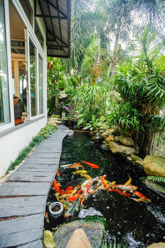 Hồ cá Koi ở sân vườn Villa sân vườn Nam Thông 3