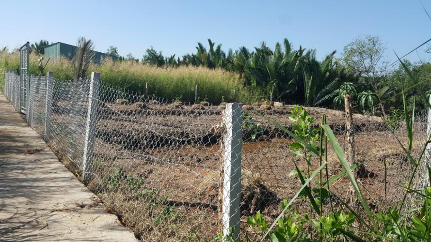 Đất nền Huyện Nhà Bè Đất nền nông nghiệp diện tích 500m2, có thổ cư.